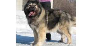 Pet cleaning products for Caucasian Shepherds