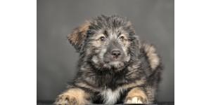 Best dog wipes for Caucasian Shepherds